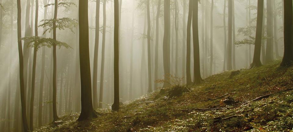 Se chauffer au bois fait du bien l 39 conomie galement - Se chauffer au bois ...